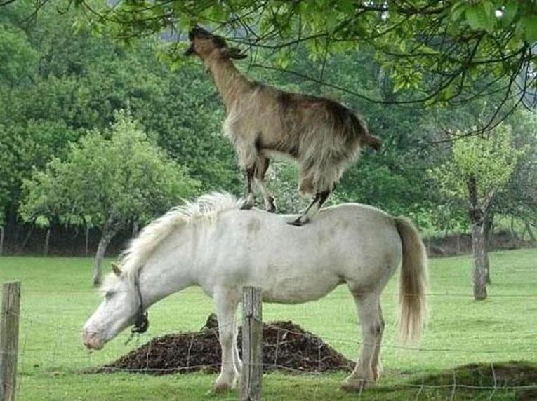 Открытки со смешными животными