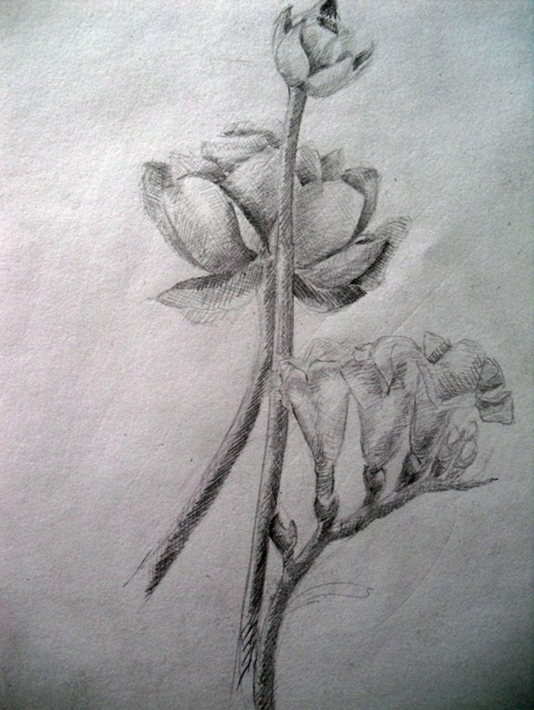 Рисунки карандашами по шагам смешные