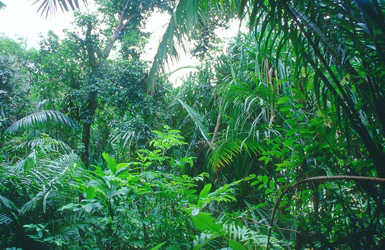 Plants In The Tropical Rainforest Pictures Facts Information